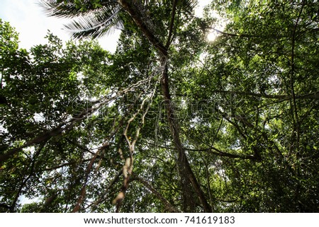 High deciduous trees in deciduous forest and blue sky #741619183
