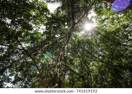 High deciduous trees in deciduous forest and blue sky #741619192