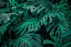 high detail tropical plants with cool tones