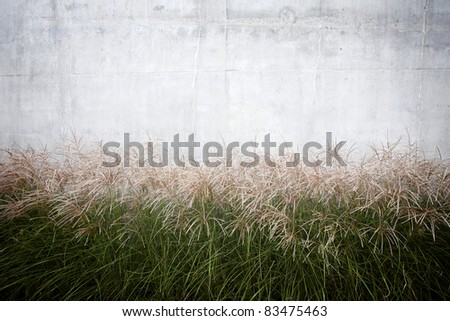 High grass against concrete wall