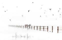 High Key Foggy landscape in Marshes of Doñana National Park. Huelva, Spain.