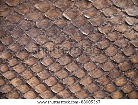 high quality brown snake skin background