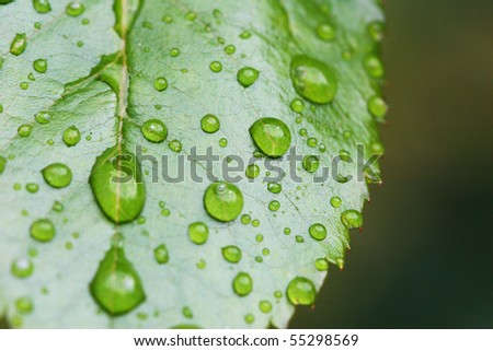 high quality details of leaf with rain drops - stock photo