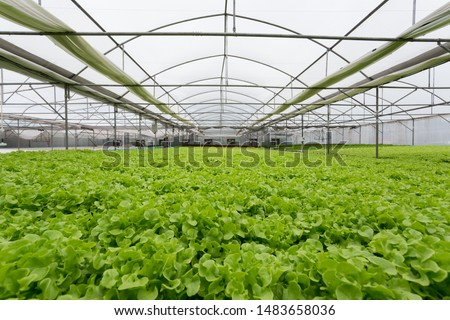 high quality of greenhouse hydroponic farm full of vegetables, plant base food ingredient. Foto stock ©
