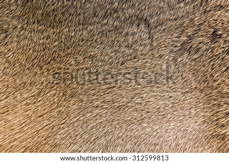 High quality of natural brown fur texture background