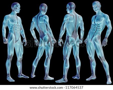 High resolution concept or conceptual human or man 3D anatomy body with muscle isolated on black background as metaphor to medicine,sport,male,muscular,medical,health,biology or fitness group or set