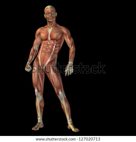 High resolution concept or conceptual human or man 3D anatomy body with muscle isolated on black background as a metaphor to medicine,sport,male,muscular,medical,health,biology or fitness design