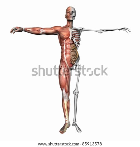 High resolution 3D illustration of a human skeleton. Isolated on white background