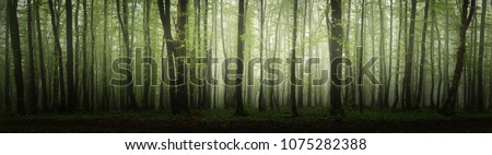 high resolution forest panorama Foto stock ©