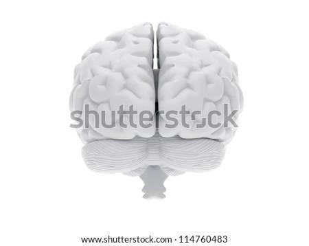 High resolution image. 3d rendered illustration. 3d human brain.