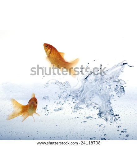 High resolution image of a goldfish leaping out of the water.