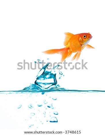 High resolution image of fish jumping up.