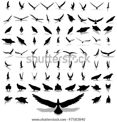 High resolution set group or collection of black eagle silhouette isolated on white background for birds,animal,wildlife,symbol,,hawk,fly,flight,emblem,wild,decoration,wings,power,conceptual or falcon
