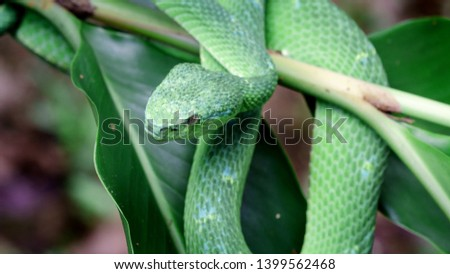 High resolution snake pics. Photo of a beautiful snake. Photo of a green snake