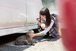High school girl petting a stray cat