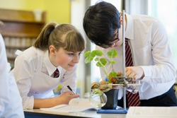 High school students conducting scientific experiment on a plant during a biology class.