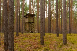 High seat for a hunter in a pine forest