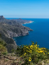 High view looking down from Cenizas Battery, towards the Mediterranean sea as it meets the rugged mountains near Portmán, Murcia, Spain. Pretty yellow spring flowers shape the foreground. Copy space.