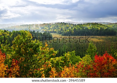 High view of fall forest with colorful trees in rain storm
