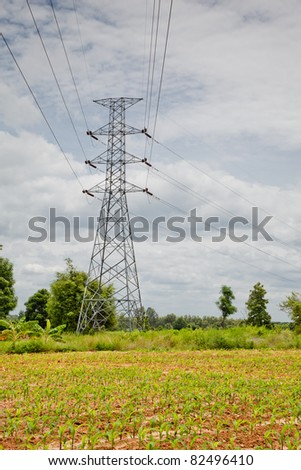 high volt electric line ran across early grow corn field in rural of Thailand