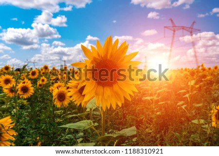 High-voltage power lines in the field with sunflowers, against the background of clouds at sunset.