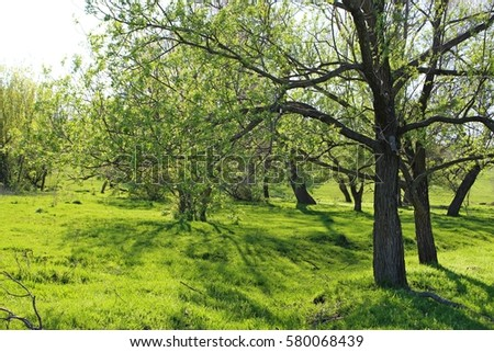 High willow growing on the beautiful green meadow. | EZ Canvas
