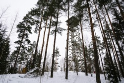 High wooden observation tower in a pine forest. Winter landscape. Latgale, Latvia. Cloudy sky.
