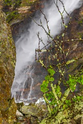 Highest freefall waterfall Vettisfossen behind trees in Utladalen Jotunheimen Norway. Most beautiful norwegian landscapes.
