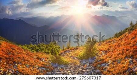 highland vegetation modest summer and unusually beautiful colors blooms in autumn, before cold weather. Blueberries bright red, coniferous forest green, orange buk- mountains sinie- fantastic charm. #275607317