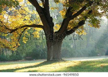 Highlights of the morning and an old oak tree