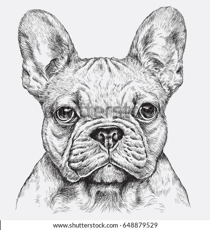 Highly detailed hand drawn French Bulldog illustration