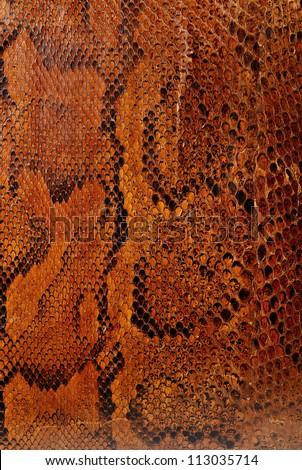 Highly patterned snake skin close up