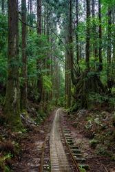 Hike in Yakushima through abandonated rail inside the forest
