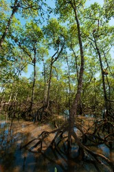 Hike through a mangrove forest.