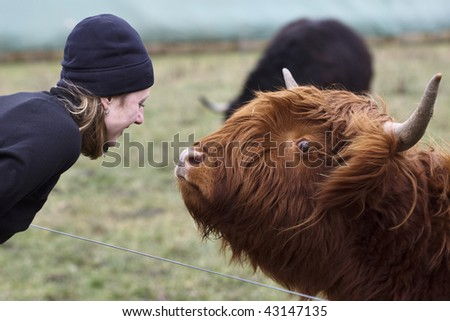 Hiker and highland cow