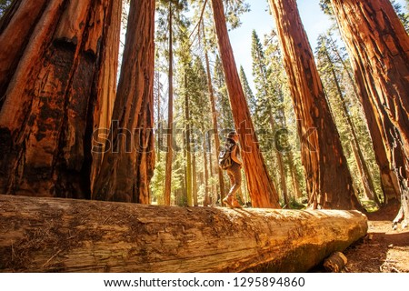 Hiker in Sequoia national park in California, USA #1295894860