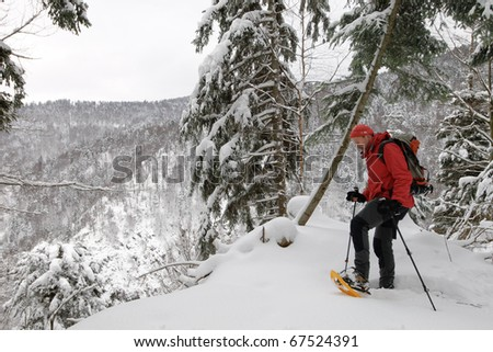 hiker in the Black Forest at winter, Germany