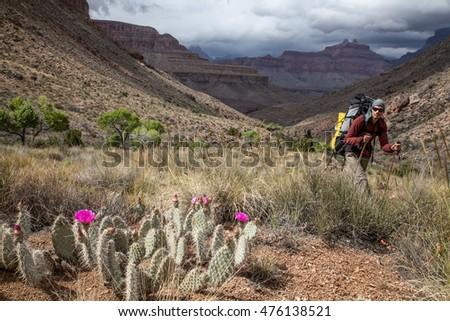 Hiker in the Grand Canyon, Arizona, USA #476138521