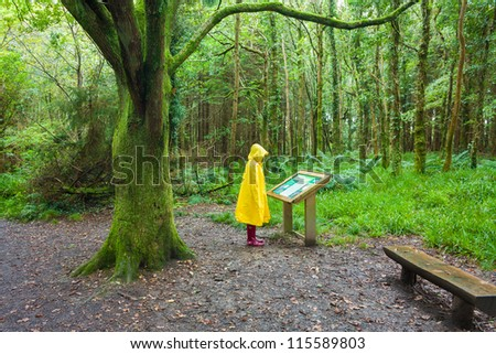 Hiker in the rain looking at description sign in the forest on a rainy day wearing a yellow raincoat and red rubber boots