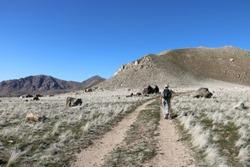 Hiker on Antelope Island Sentry Loop trail enjoying views of the Great Salt Lake and Wasatch Mountains of Utah