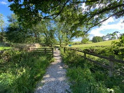 Hikers footpath, leading away from, Fewston Reservoir, with old trees, and dry stone walls in, Fewston, Harrogate, UK