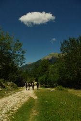 Hikers walk along a path in the woods, a small white cloud stands out against the blue of the sky.