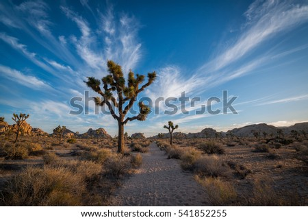 Hiking along a trail in Joshua Tree National Park
