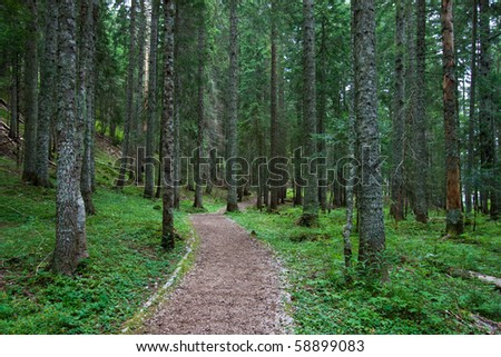 Hiking / Biking trail in the middle of pine tree forest