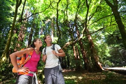 Hiking couple in forest Redwoods, San Francisco. Hiker couple walking among Redwood trees near San Francisco, California, USA. Multiracial couple, young Asian woman and Caucasian man.
