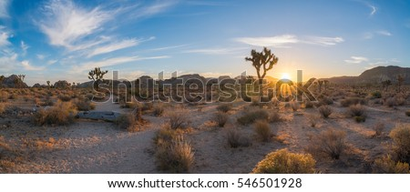 Hiking early in the morning at Joshua Tree National Park