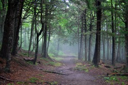 hiking in fundy national park in new brunswick, canada