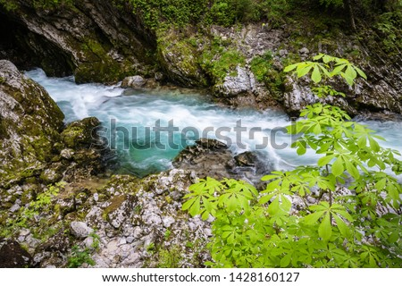 hiking in scenic valley of vintgar gorge in slovenia #1428160127