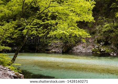 hiking in scenic valley of vintgar gorge in slovenia #1428160271
