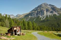 Hiking in Swiss National Park near Zernez in Switzerland